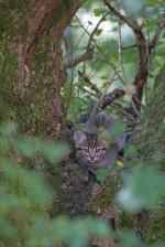 Puits Enfer chat matin 130816 56 chat entier arbre