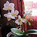Mes orchidées # 2