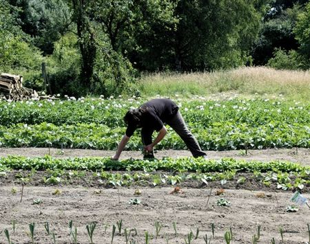 Avec le ccas d 39 hirson cultiver des jardins pour faire for Candide cultiver son jardin