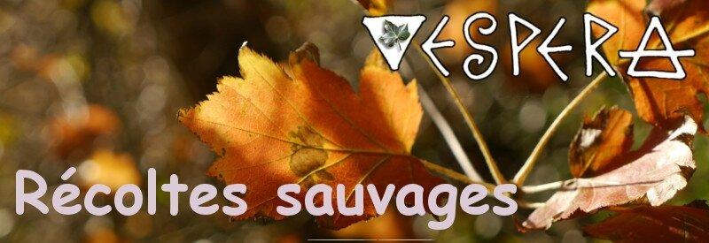 banniere_VESPERA_recoltes sauvages automne