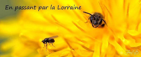 essai bannière lorraine 2012_6-signée