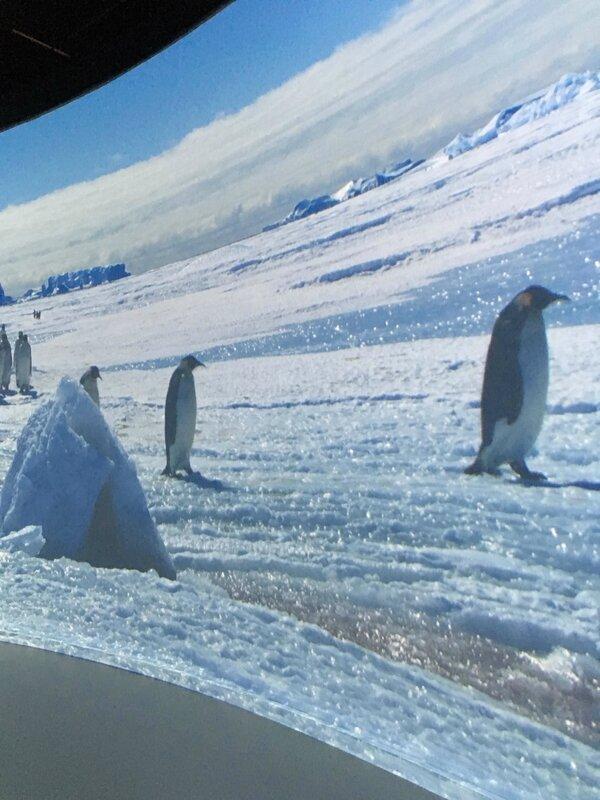 11-musee-des-confluences-exposition-antartica-lyon