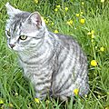 Charmant chat gris dans l'herbe