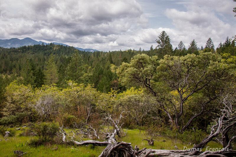 Cathedral Hills - Oregon