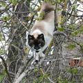 2009 05 11 Blanco dans les branches d'un arbre