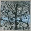 reflet arbre d'hiver