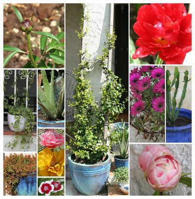 jardin_avril
