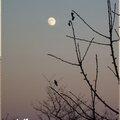 ♥ l'oiseau et la lune ♥