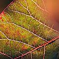 feuilles-automne17-04