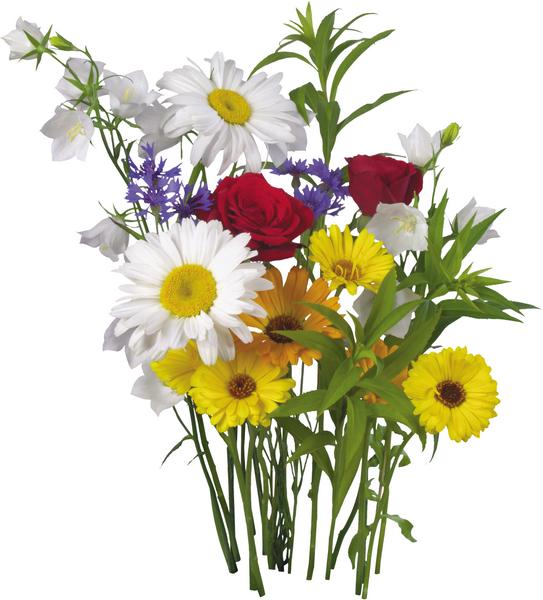 """Assemblée générale du """"club des fleurs des champs """"mardi 21 Novembre"""