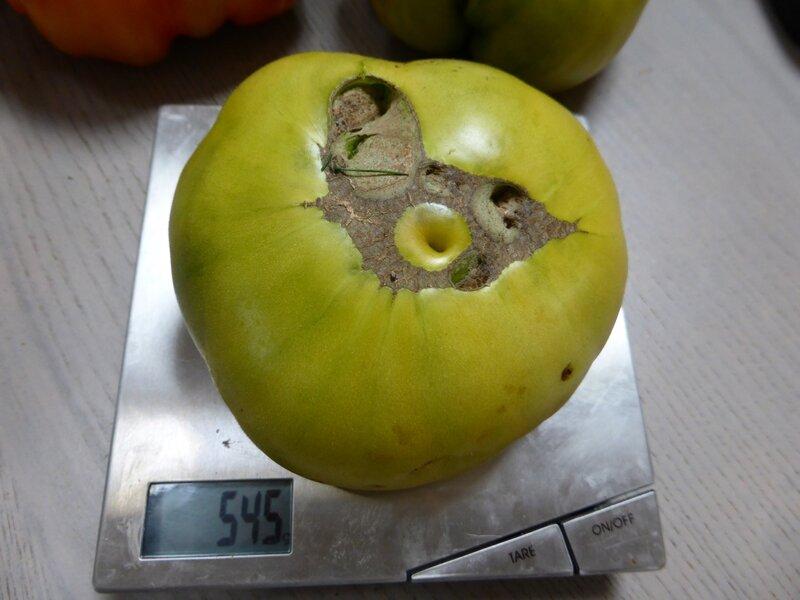 30-tomates (1)