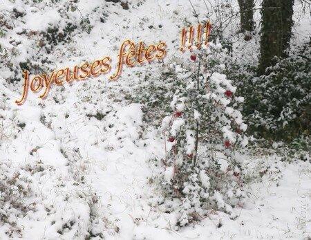 Houx-a-Noel---L450--contrastes--joyeux-Noel