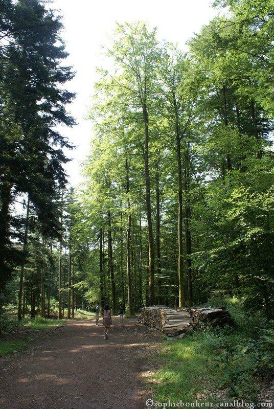 Nideck forêt