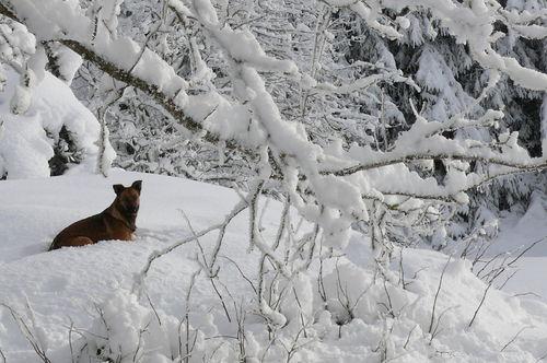2008 12 17 Kapy sous les branches d'arbres enneigés