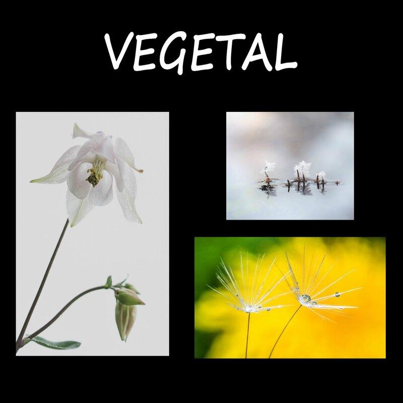 Tableau 1 Végétal