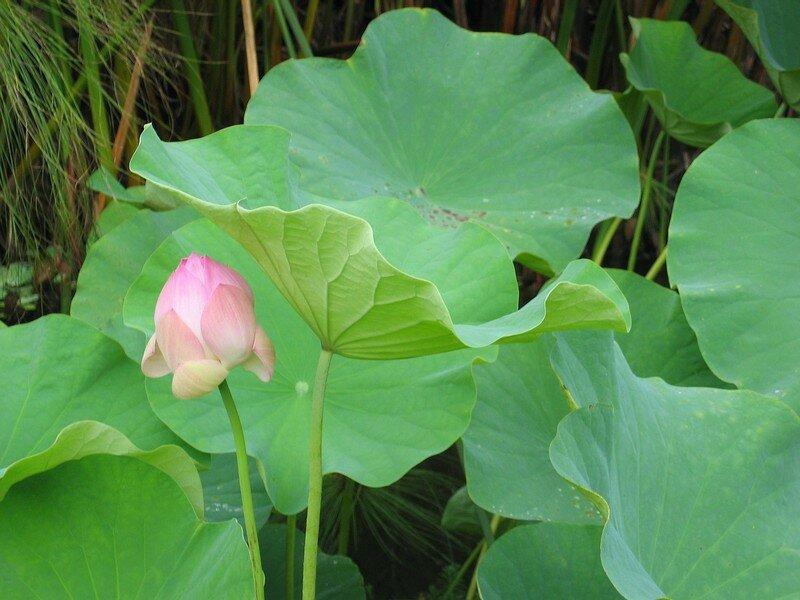 Ile de la r union saint gilles jardin d 39 eden lotus for Entretien jardin ile de la reunion