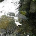 bain de canard !