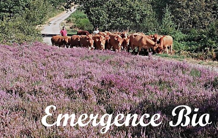 0 Emergence Bio