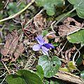 [dans le jardin] le printemps approche...