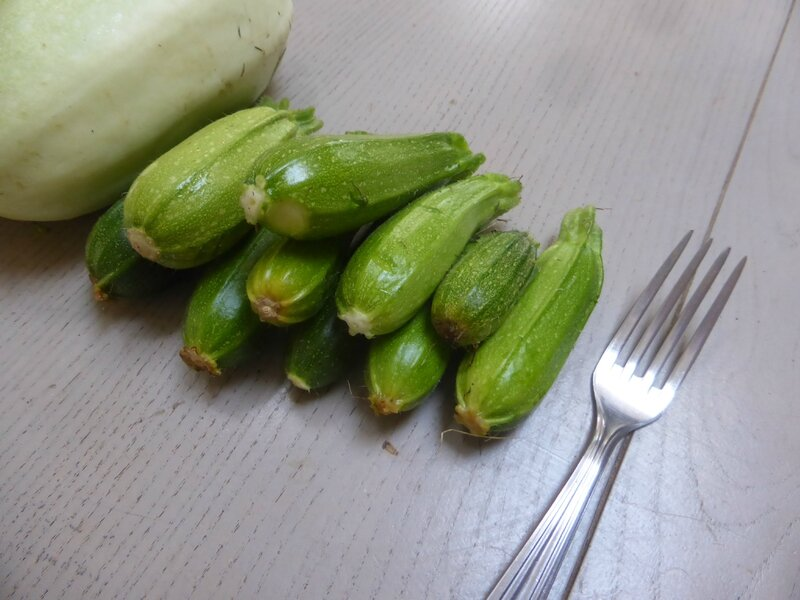 2-courgettes (1)