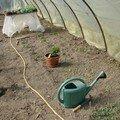 2008 05 04 Les légumes sous serre