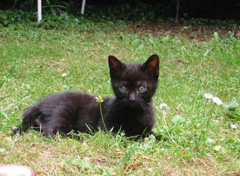 Le jardin du sophora - Eloigner les chats du jardin ...