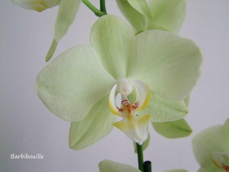 orchidée28 Juin14