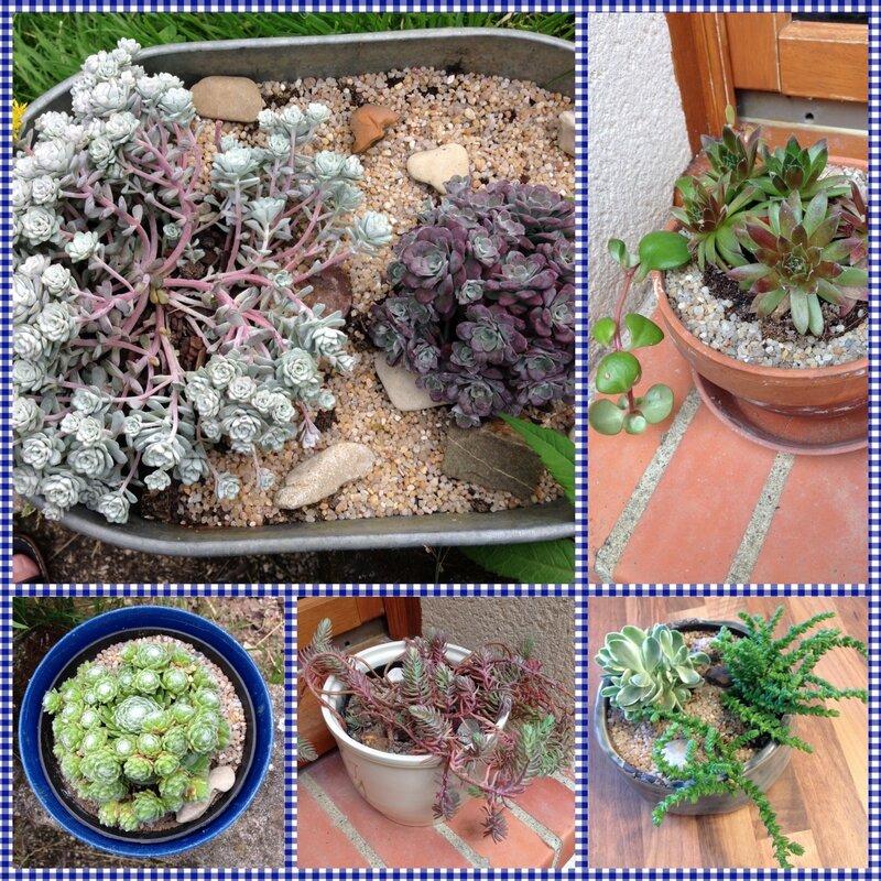 Succulentes_ao_t_2016