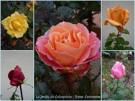 roses_automne_2010