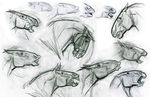 AngusExp_ExpressionDrawings_MNolte_Graphite_2005