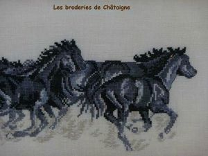 chevaux noirs 3