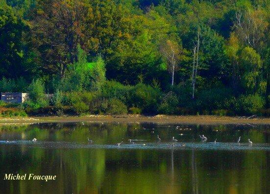 12) étang de lemps