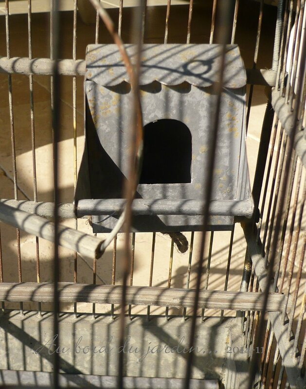 Cage à oiseau copie