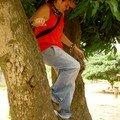 so ds l'arbre