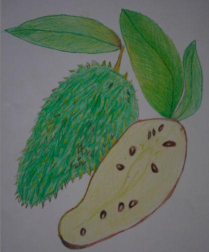 fruit 13