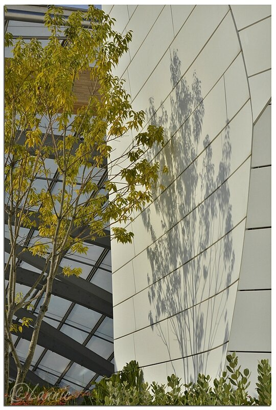 Paris_Fondation_L_V_ombres