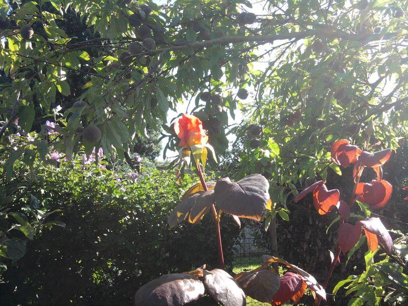 Jardin d'automne - Cocon de décoration