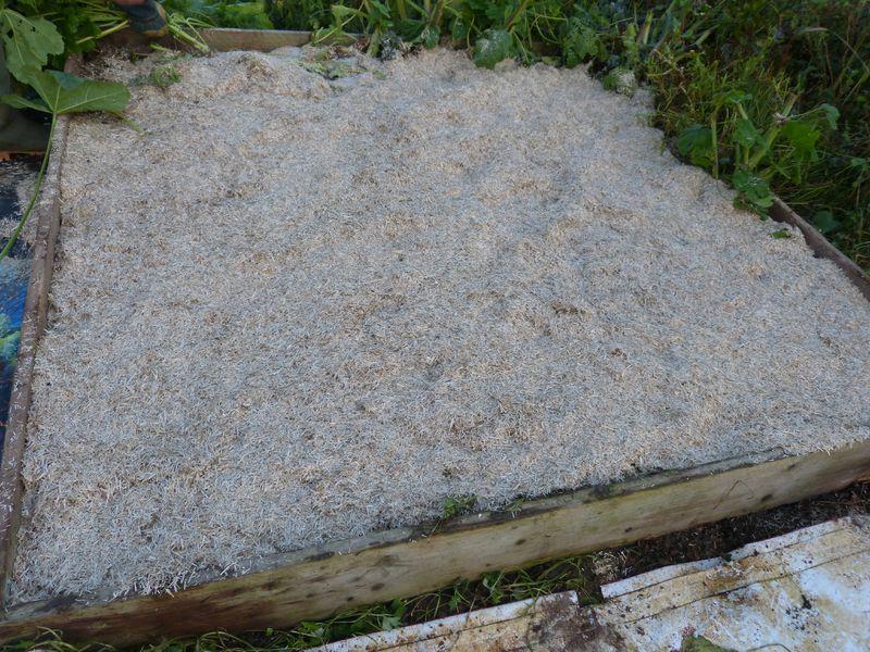 plantation des l gumes perp tuels dans le carr potager notre jardin ecologique. Black Bedroom Furniture Sets. Home Design Ideas