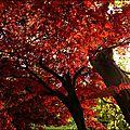 2012_11_11-POM-P1140631