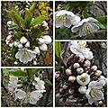Jardin avril (15)