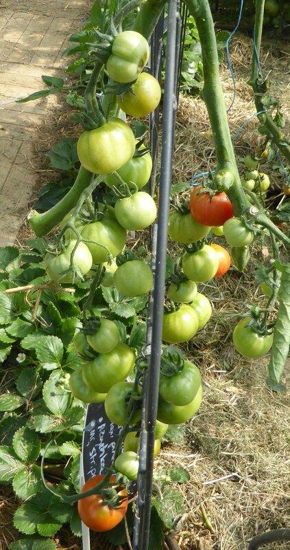 22-tomate cassée--- (8)