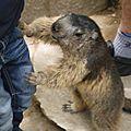 05 Les Marmottes (15)