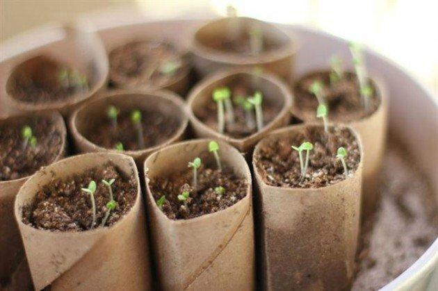 Recycler vos rouleaux de papier toilette pour vos semis - Que peut on faire avec des rouleaux de papier toilette ...