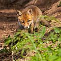 2014-05-30 LUX-1124