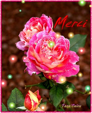 Roses_lumineuses_Merci_TC
