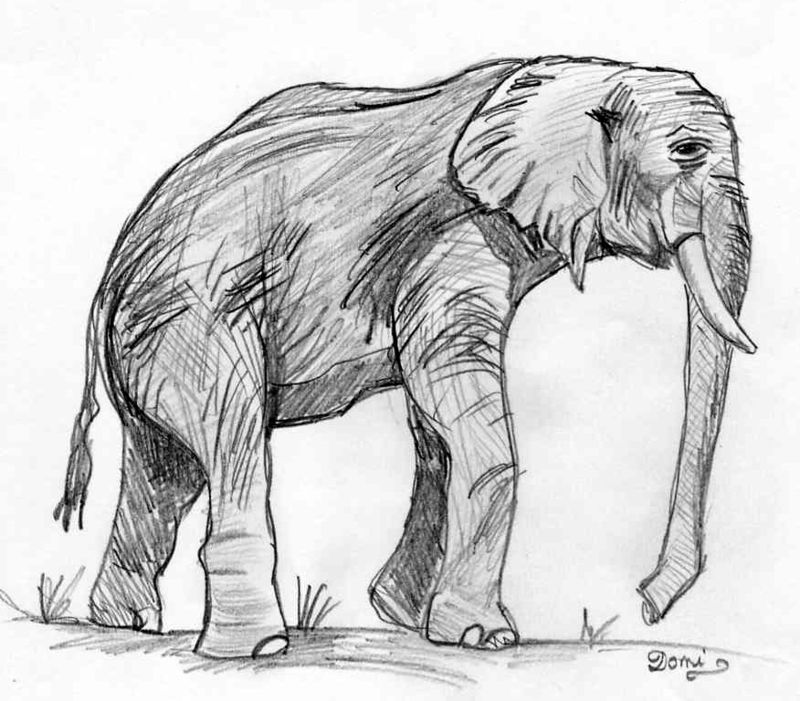Top Comment dessiner un ELEPHANT - Domi Dessins et Peintures HP67