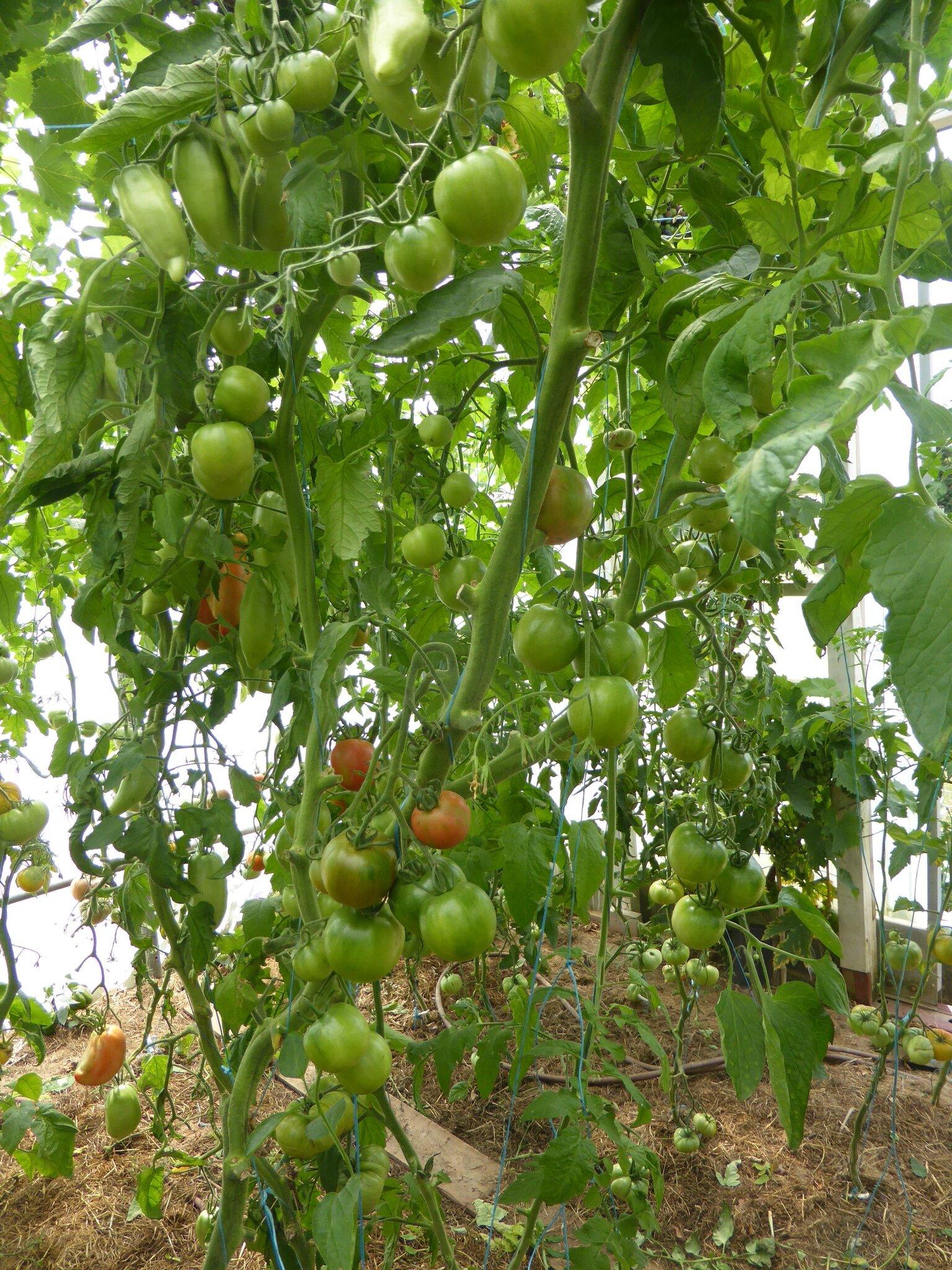 5-tomates (18)
