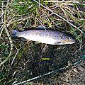 Ouverture de la pêche à la truite 2015, le samedi 14 mars, sur le vrin, au