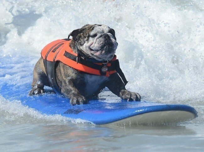chiens surfeurs USA 3