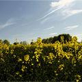 Ribambelle jaune